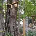 Φωτογραφία: Nashinoki Shrine