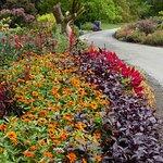 溫哥華植物園照片
