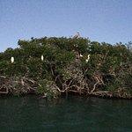 Bahía Honda, un lugar con abundante fauna