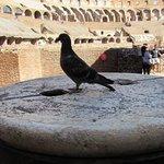 Pigeon . On a plinth ?