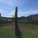 Foto van Blue Grouse Estate Winery and Vineyard