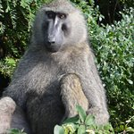 Ảnh về Nile Delta Cruises - Murchison Falls