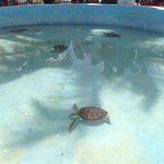 Photo de Sea Turtle Hatchery