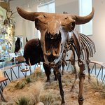 Fort Collins Museum of Discovery照片