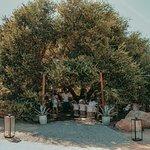 Animalón under an oak tree