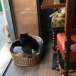 Le Café des Chats - Bastille Foto