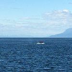 Juneau Whale Watch照片
