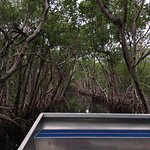 Foto de Everglades City Airboat Tours