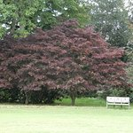 Beautiful trees - starting to turn ready for autumn
