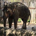 Fort Worth Zoo resmi