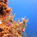 Poseidon Calella fényképe
