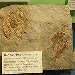 Peces fosilizados