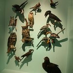 Aves de Sudáfrica 4