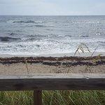 Foto de Dune Deck Cafe