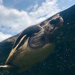 Bild från Aqua World Ibaraki Prefectural Oarai Aquarium
