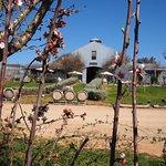 Lowe Wines Foto