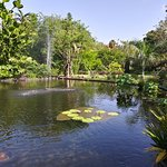 Miami Beach Botanical Garden照片