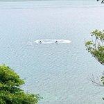 Photo de Coastal Watersports, St Thomas