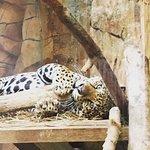 Foto de Elmwood Park Zoo