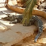 Фотография Krokodilfarm Animalia