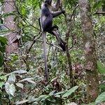 Photo of Raza Jack Ketambe Jungle