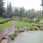 Тропа к оливковой роще
