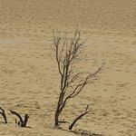Foto di Sand Dunes