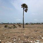 صورة فوتوغرافية لـ Neduntheevu (Delft Island)