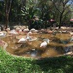 Foto de Parque das Aves