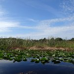 Photo of Boggy Creek Airboat Adventures