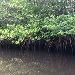 Foto van Mangrove Forest Nusa Lembongan