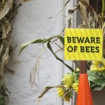 but, beware of bees