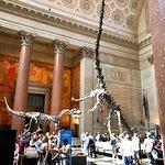 Billede af American Museum of Natural History