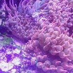 Photo of Loveland Living Planet Aquarium