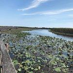Φωτογραφία: Point Pelee National Park