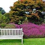 Heath and rock garden