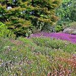 heath and rock gardens
