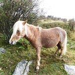 Wild pony on federal land.