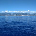 Photo of Azores Whale Watching TERRA AZUL