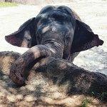 Elephant Insider Tour