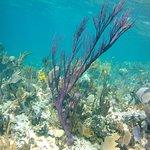 Gold rock reef