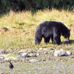 One of three bears we saw on our trip