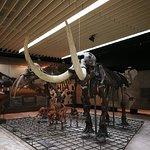 Фотография Музей естественной истории Зенкенберг
