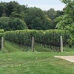 Foto de Two Sisters Vineyards
