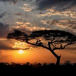 Another glorious sunset at Serengeti National Park. Wow, just wow!