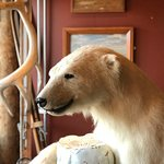 Mary-Ann's Polarrigg ภาพถ่าย