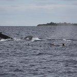 Foto de Whale Discoveries