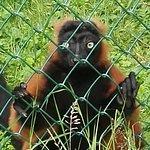 Foto Skaerup Zoo