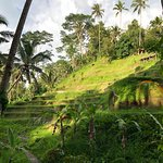 Foto di Tegalalang Rice Terrace