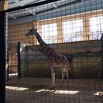 Photo of Kaliningrad Zoo
